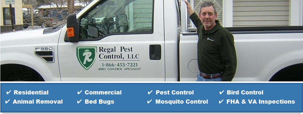 Pest Control Animal Removal Services Plymouth Michigan