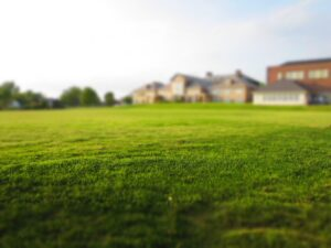 lawn, grass, mowing
